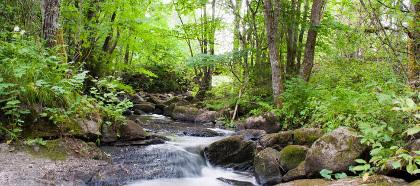 skogskonferensbild1